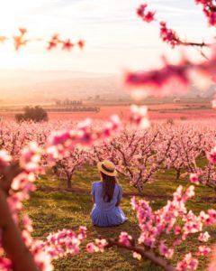Arbres florits Ribera d'Ebre